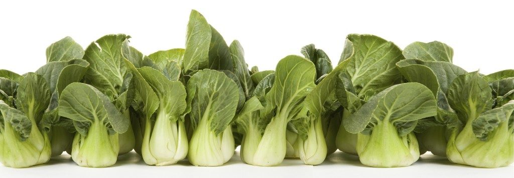 bokchoy line-up